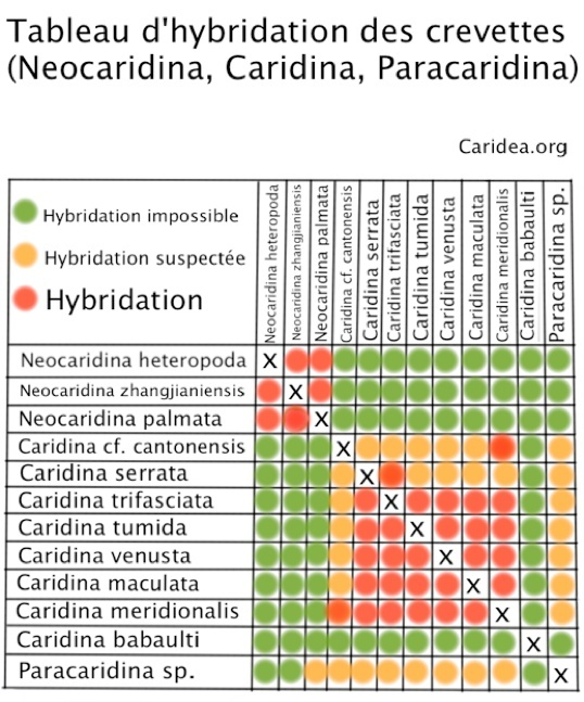 tableau d'hybridation Hybrid11