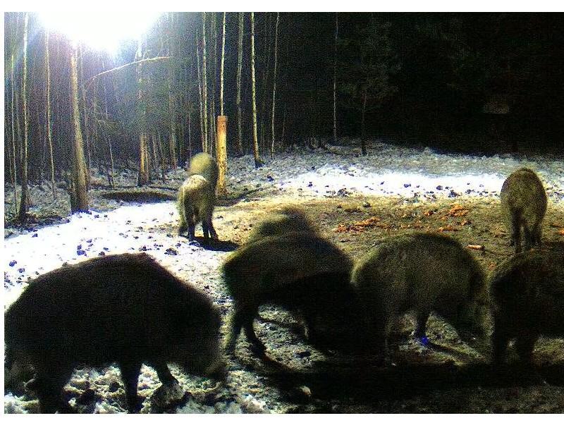 Web Cam en Direct d'une forêt ! ! ! - Page 2 Dfdfdf10