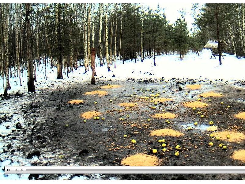 Web Cam en Direct d'une forêt ! ! ! - Page 2 Siga_b10
