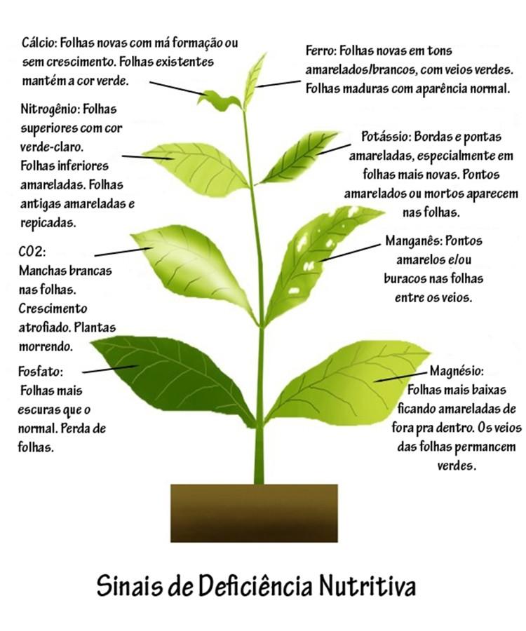 Sinais de deficiência nutritiva das plantas. Sinais11