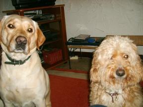 2 chiens perdu Getatt10