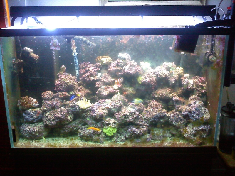 lets see your sw tanks! 90pic110