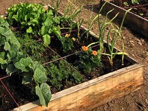Comment installer un jardin en carré Potage10