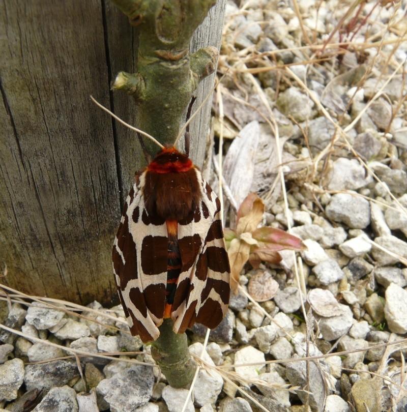 le déffilé des chenilles et des papillons 310110