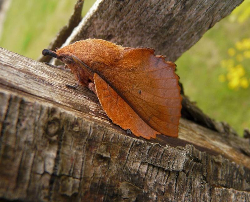 le déffilé des chenilles et des papillons Copie_10