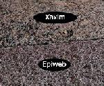 Épiphyte, montage sur un support 1/3 : choix du support  Compar10