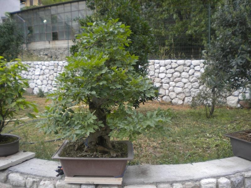 Paolo Beltrame - 2 piante Dscn6710