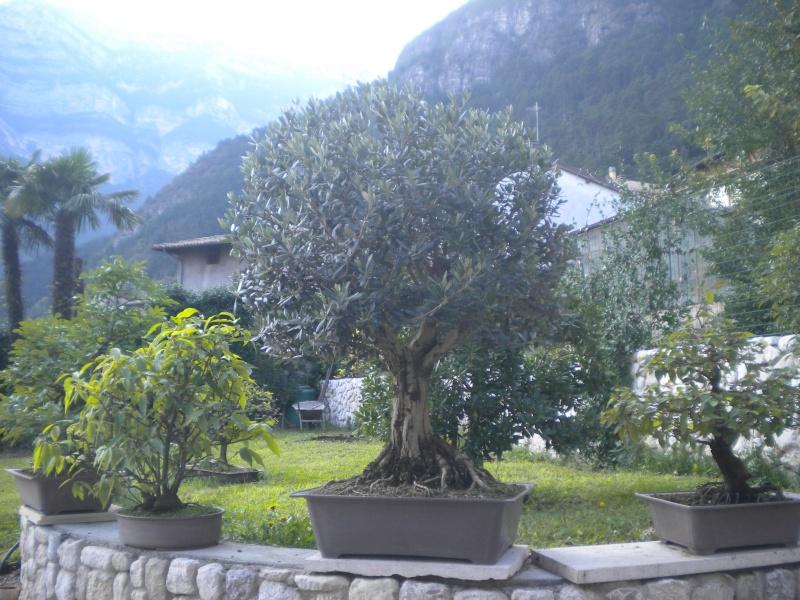 Paolo Beltrame - 2 piante Foto_c10