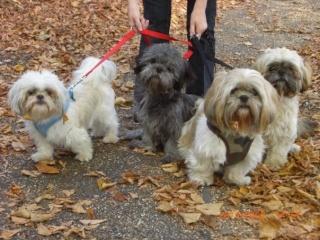 Welcome Dogmadlady Dog_wa14