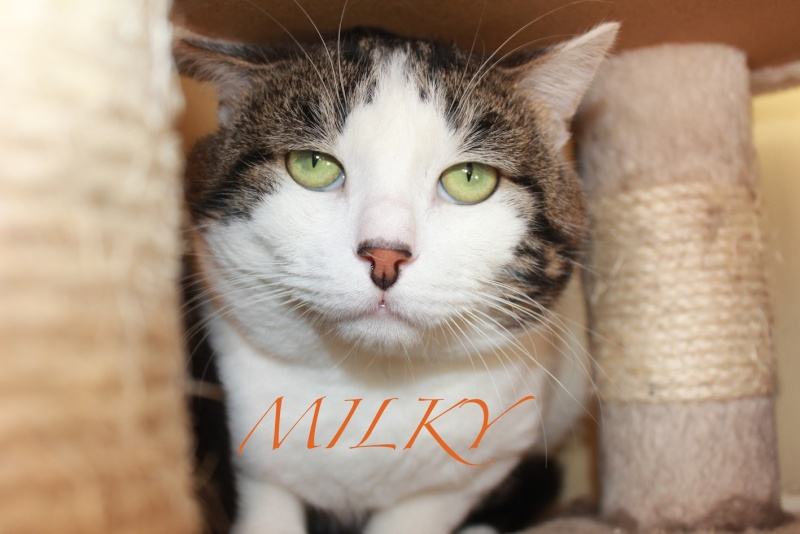 MILKY adopté le 27.12.12 Mlky10
