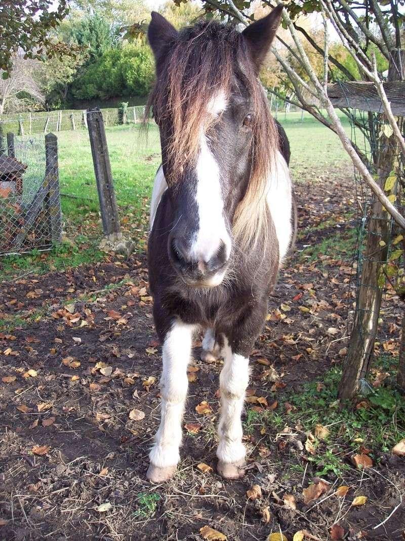 LOONY -  ONC poney né en 2001 - Adopté en juin 2011 par Carole Loony510