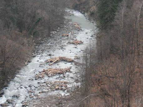 Legna da alvei fluviali - Pagina 2 P1100011