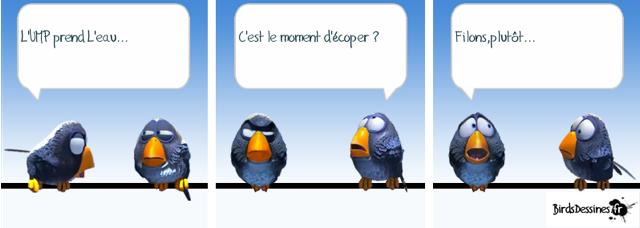 Les Birds Dessinés Image10
