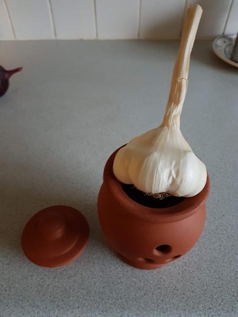 Garlic storage pot ...  20181010