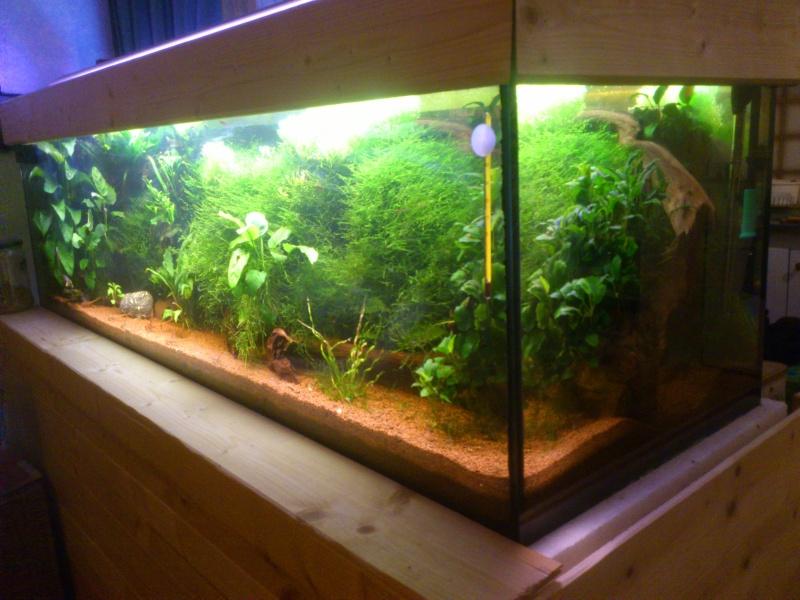 kej aquariumsssssssss!! - Page 8 Dsc_1022