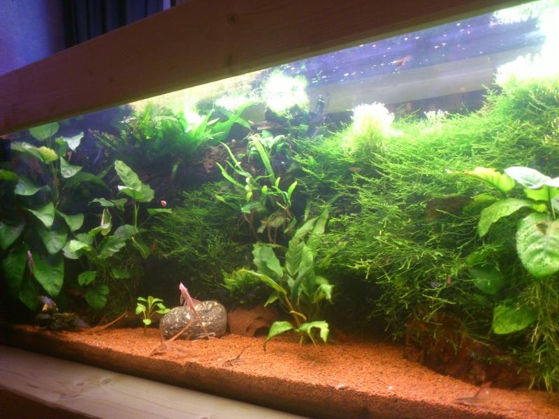 kej aquariumsssssssss!! - Page 8 Dsc_1023
