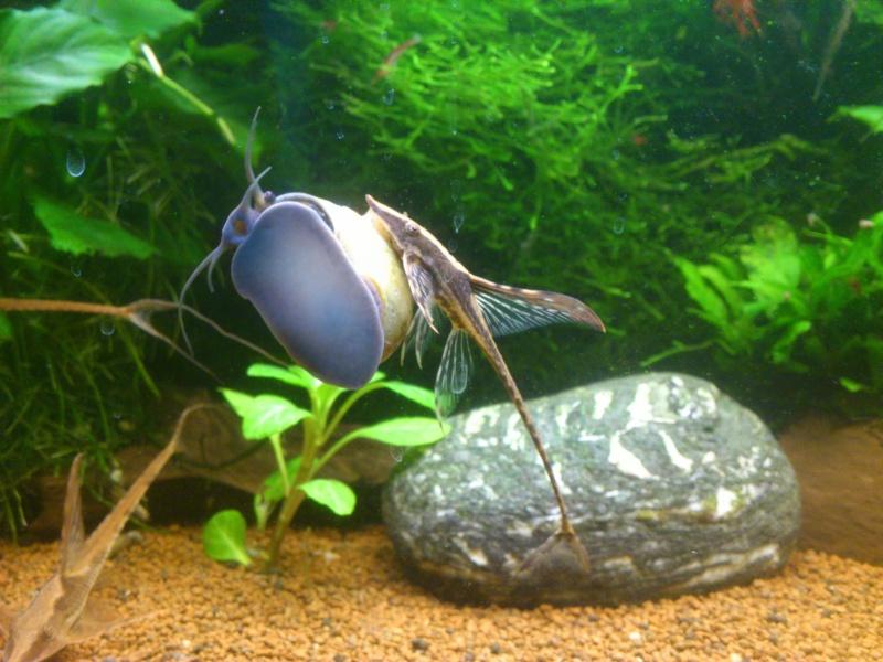 kej aquariumsssssssss!! - Page 8 Dsc_1027