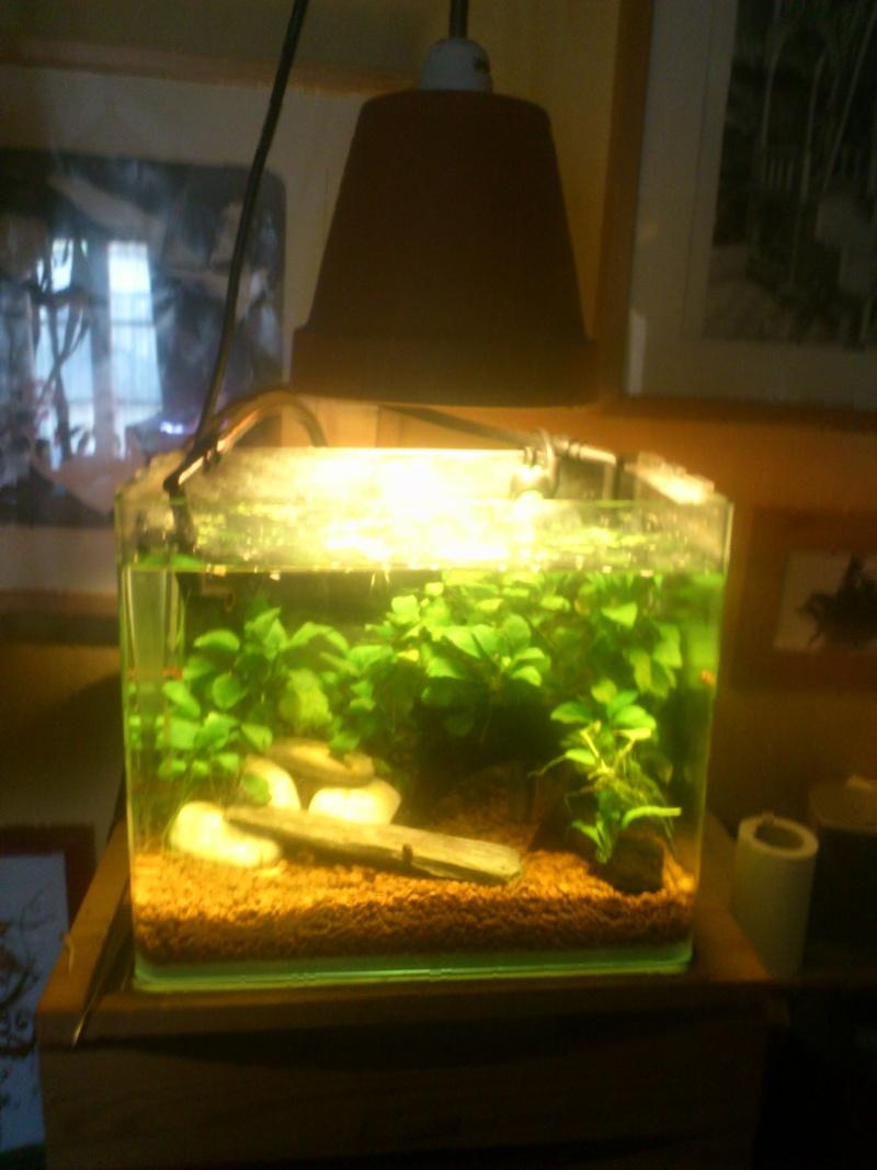 kej aquariumsssssssss!! - Page 8 Dsc_1029