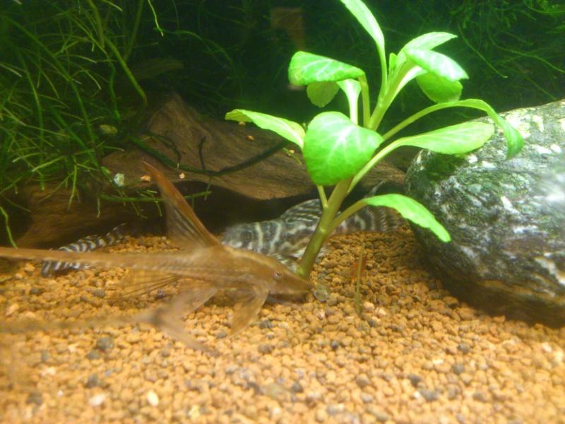 kej aquariumsssssssss!! - Page 8 Dsc_1117