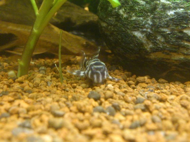 kej aquariumsssssssss!! - Page 8 Dsc_1118