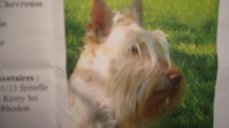 Perdue Scottish terrier à Saint rémy / RETROUVEE Dsc05210