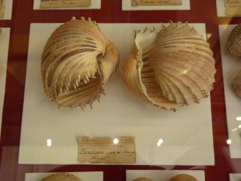 Musée océanographique de Monaco 28725110