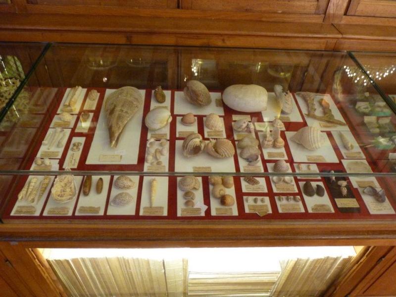 Musée océanographique de Monaco 29699010