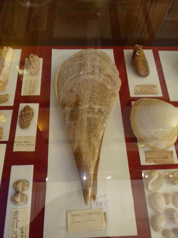 Musée océanographique de Monaco 31073110