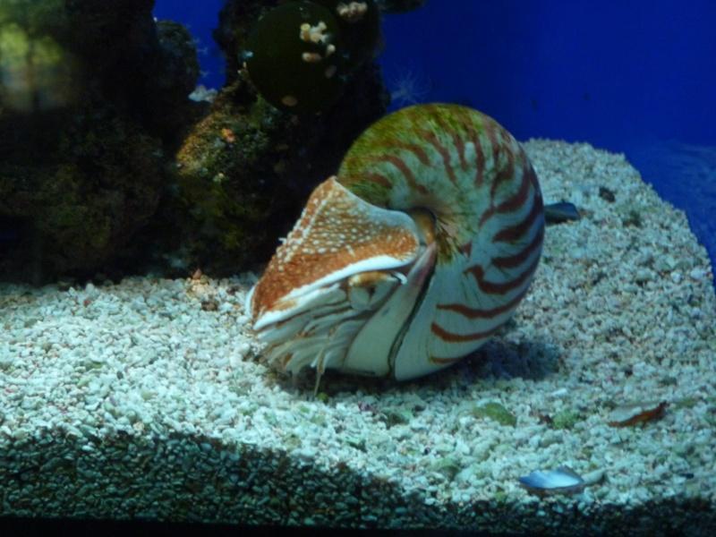 Musée océanographique de Monaco 33184410