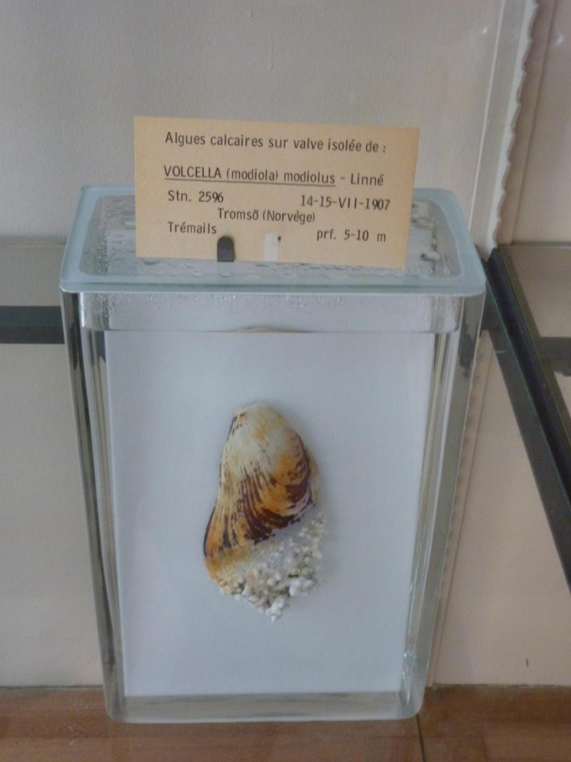 Musée océanographique de Monaco 33547510