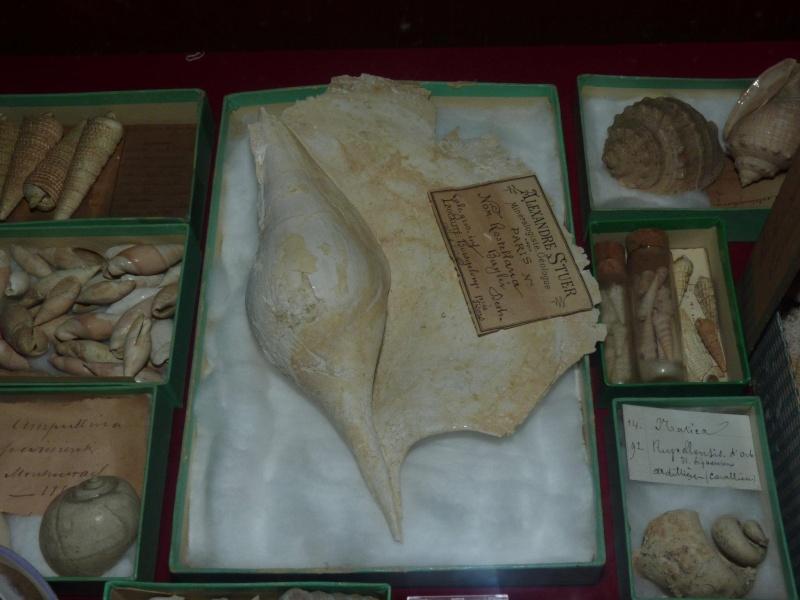 Musée océanographique de Monaco 34085110