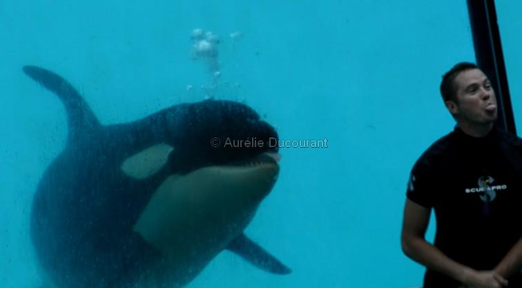 [Photos] Orques aux vitres - Page 2 Sans_t12