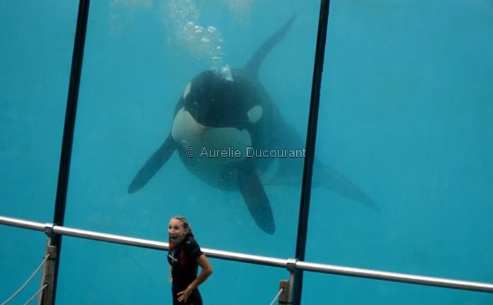 [Photos] Orques aux vitres - Page 2 Sans_t14
