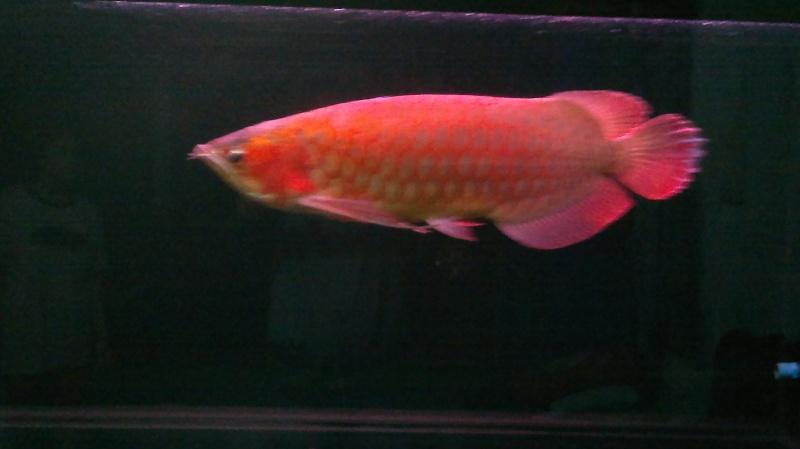 มังกรแดง 2013-039