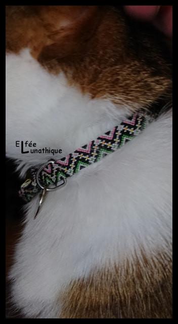 Elfée des bracelets Collie12