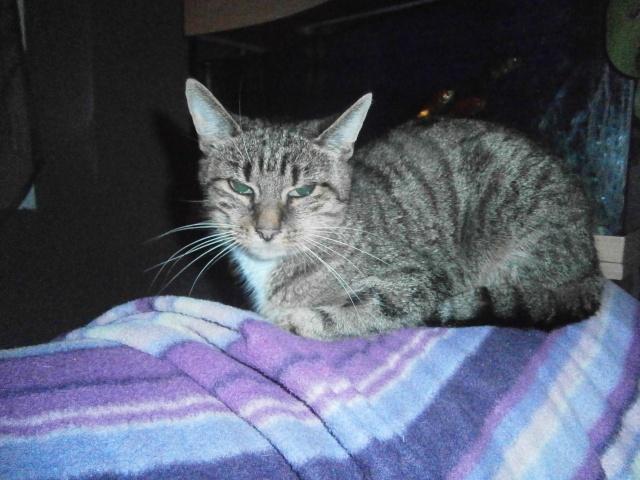 lilly minette qui a évité l'eutanasie 62 coeur de félins Lili10