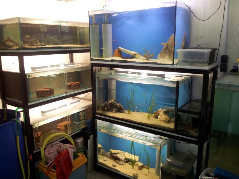 presentation de ma fishroom - Page 2 2013-015