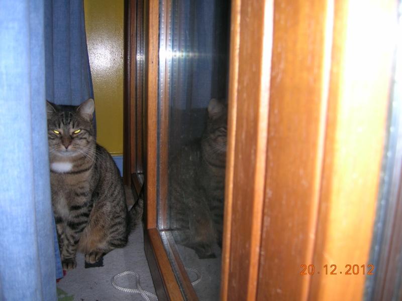 THEMIS, née en janvier 2010 Dscn8323