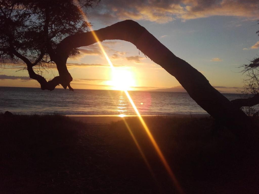 Maui, Hawaii 41239110