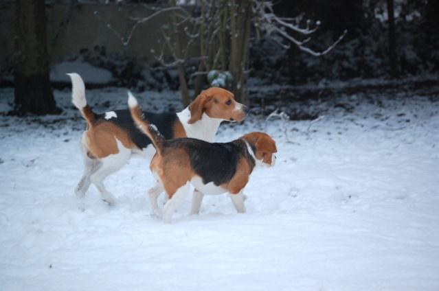 FILOU, beagle de 3 ans (59) en FA chez Fabou [Adopté] - Page 17 Dsc_0087
