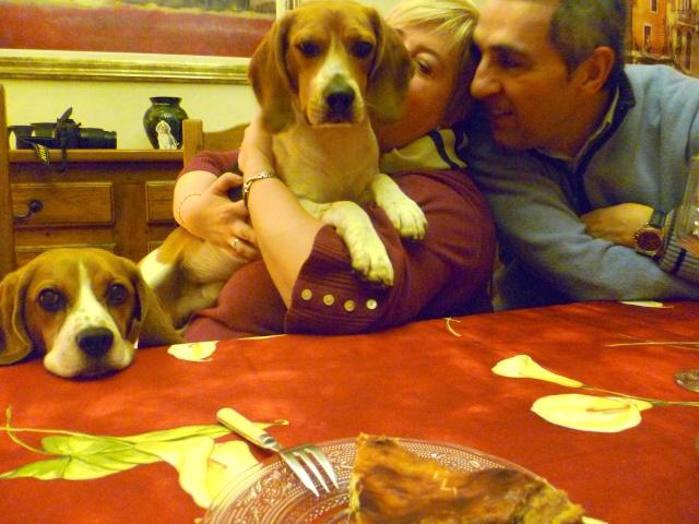 FILOU, beagle de 3 ans (59) en FA chez Fabou [Adopté] - Page 19 P1110611