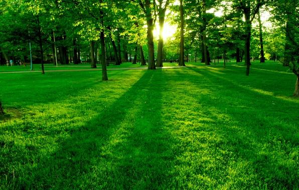 Этот прекрасный мир (Общение на разные темы) Green10
