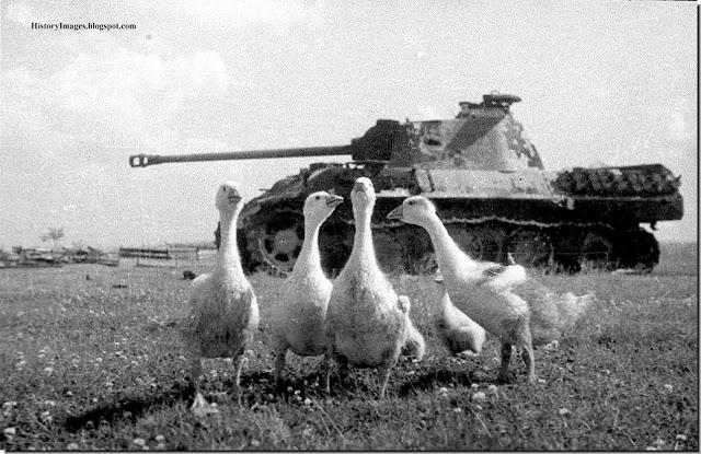Le bilan de la seconde guerre mondiale Destro10