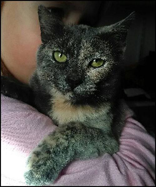 OSIRIS chaton femelle 15414010