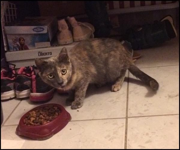 OSIRIS chaton femelle Img_5810