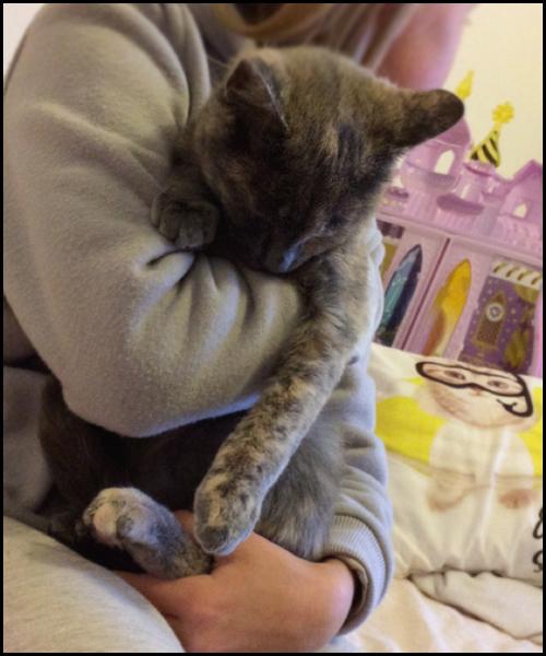 OSIRIS chaton femelle Img_5812