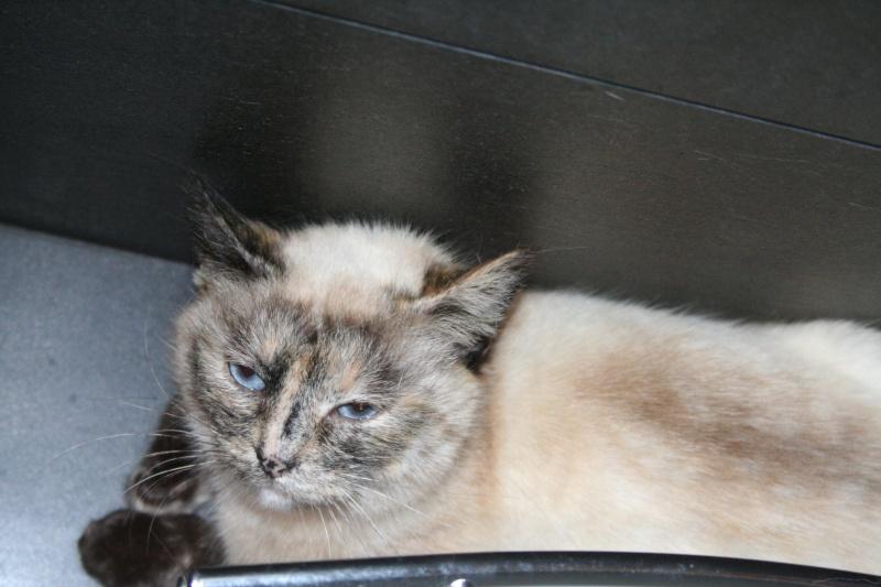 Photos des chats sauvés, avant/après Img_3510