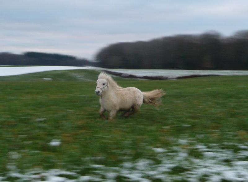 """Concours photo  """"L'irish cob dans la neige"""" Copie_13"""