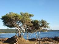 Balade sur le littoral varois Dscf2130