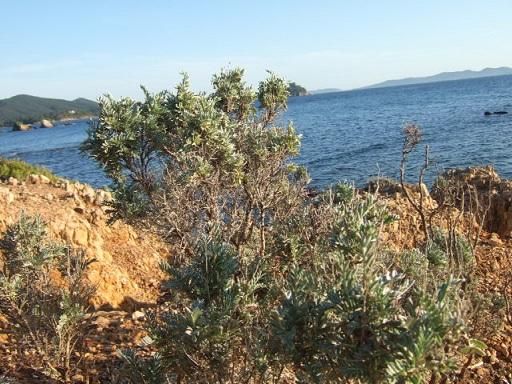 Balade sur le littoral varois Dscf2136